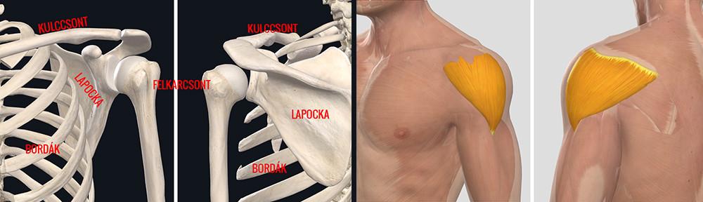 boka ízületi gyulladása, mit kell tenni ízületi fájdalom alkar kezelés
