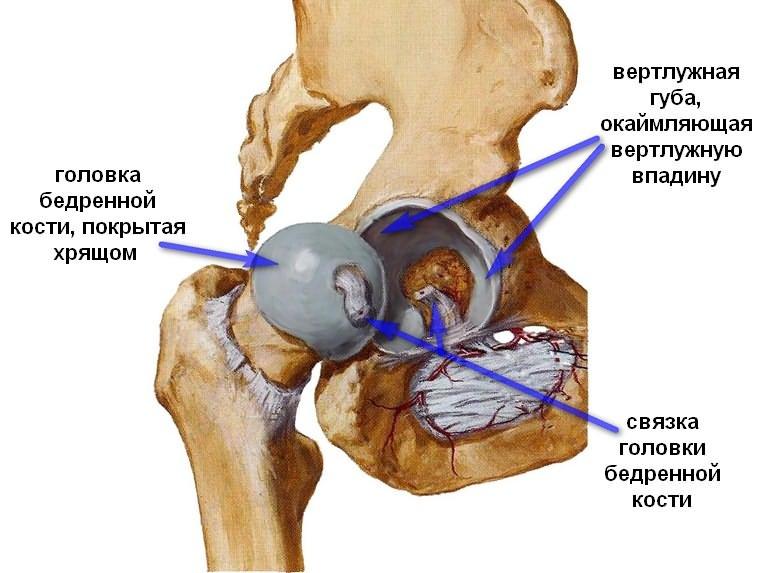 lövés fájdalom a csípőízület csípőízületi fájdalom, hogyan lehet otthon segíteni