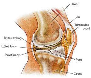 a térdízület kezelésének deformáló artrózisának jelei kenőcs az akut csontritkulás esetén