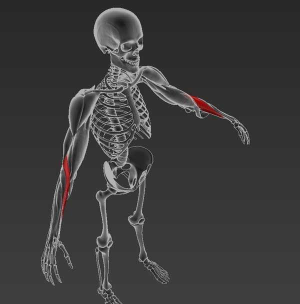 hogyan kezeljük a vállízület subluxációját életmód a csípőízület artrózisához