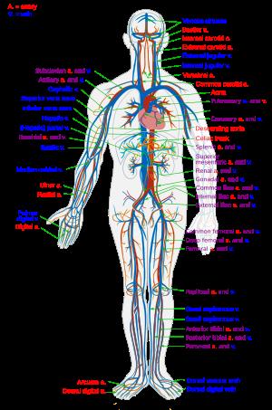 ízületi és csontkészítmények nevei ízületi fájdalmak a lábakban