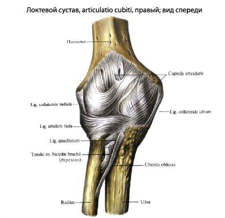 ízületek kezelésének szubluxálása kenőcsök nyaki osteochondrozis kezelésére