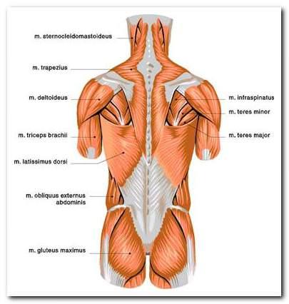a legjobb gyógyszer a csípőízületek fájdalmairól kúpok kezelése az ujjak ízületein
