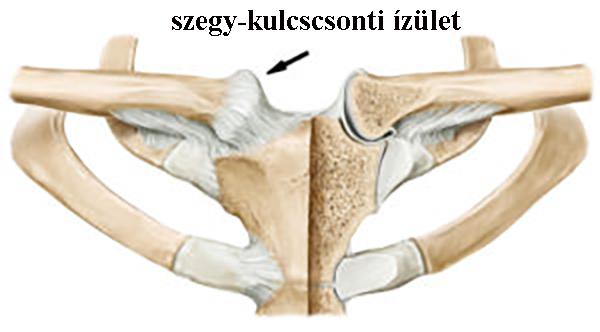 skat-m vállízület artrózisával a használt ízületek fájdalma