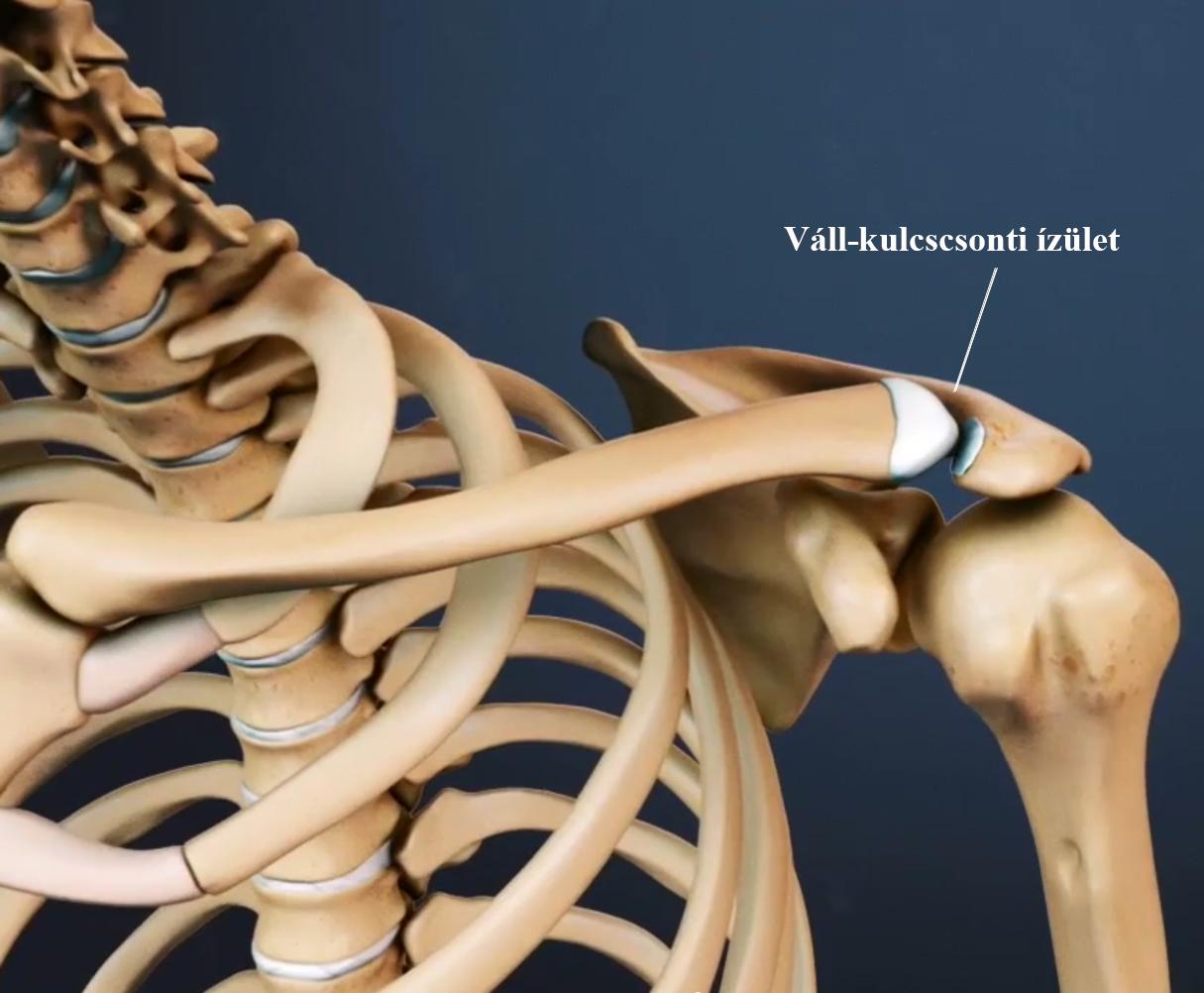 ízület és fájdalom az ízületben az alsó lábszár artrózisának kezelése