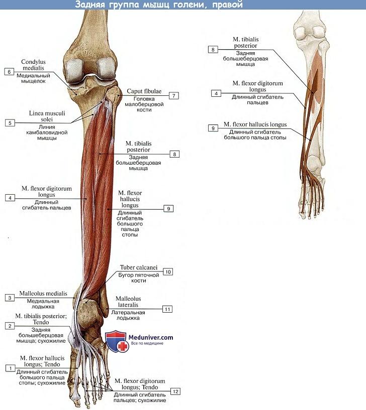 az alsó lábszárcsontok kezelése a jobb oldali csípőízület fájdalmának oka