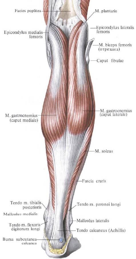 deformáló ízületi tünetek kezelése glükozamin-kondroitin leírás