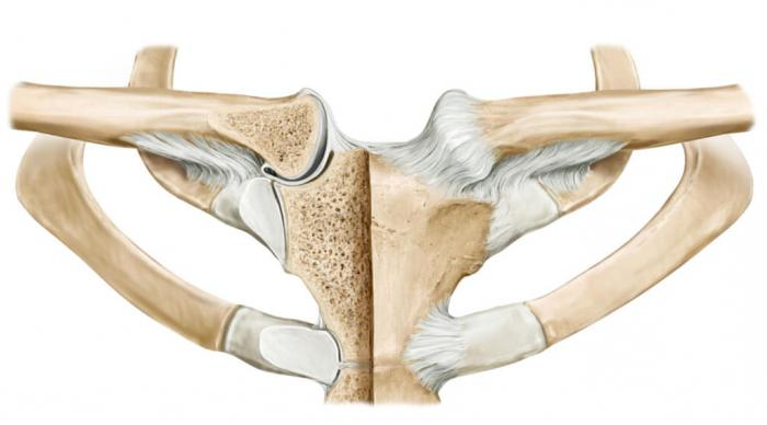 fájdalom a sternoclavicularis ízületben