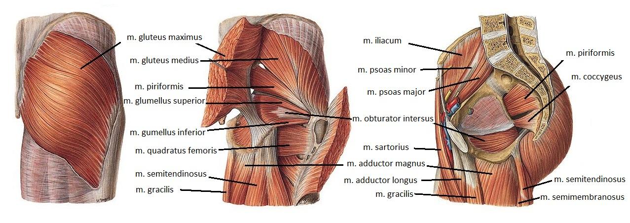 a csípőízület izmainak betegségei az alkar ízületei fájnak