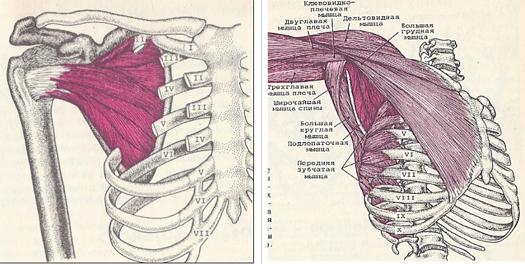 hogyan kezeljük a vállízület subluxációját ujjak ízületi gyulladás