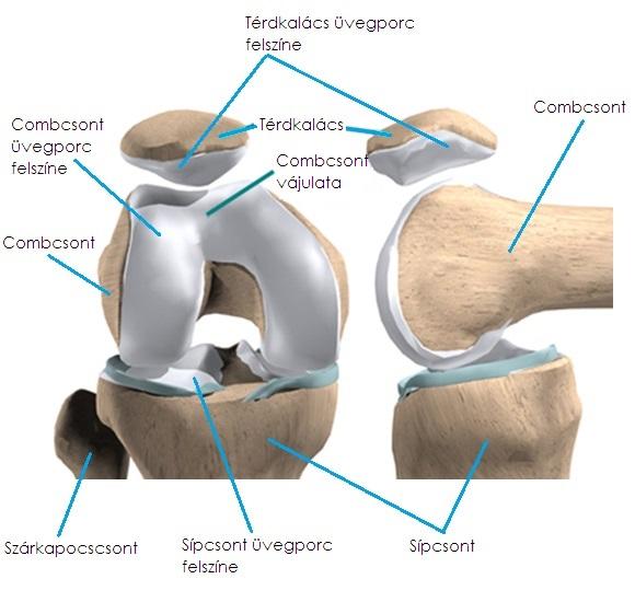 a térd akut artrózisa kenőcsék térdízületekhez hosszú üléssel