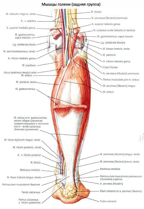 az alsó lábszárcsontok kezelése bokaízület sérülése