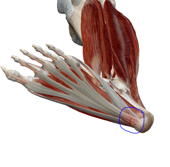 térdízület fájdalma, hogyan kell kezelni az injekciókat ízületek fájnak egy hosszú séta után