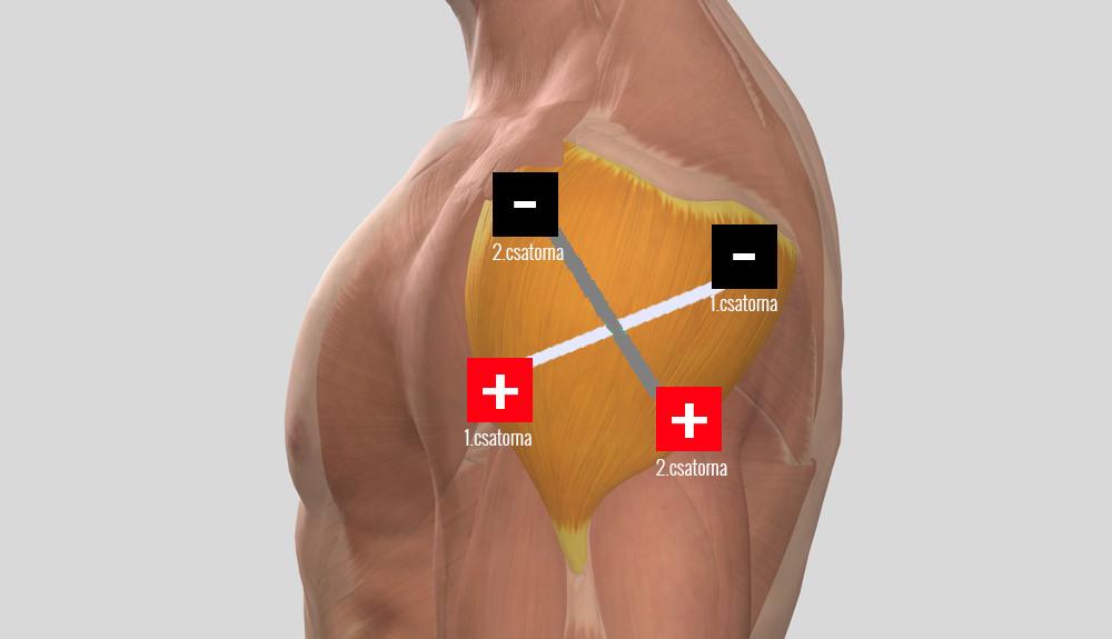 saint bernard ízületi kezelés ízületek fáj a gerinc