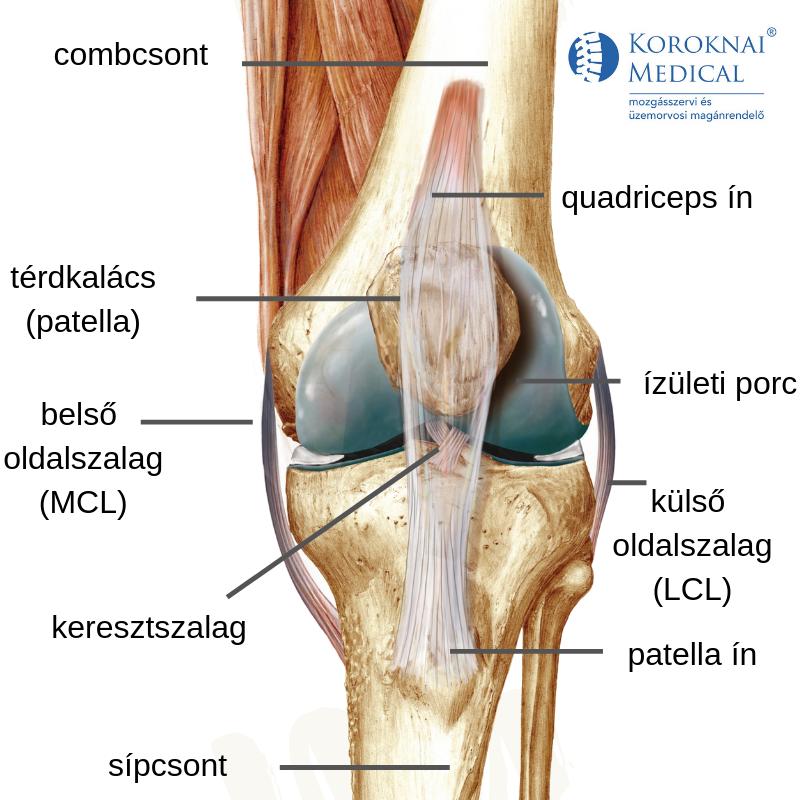 térdízületi fájdalom járás közben