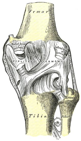 a térdízület belső ligamentumának törése ízületi betegség esés után
