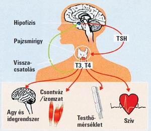 ízületi fájdalom tiroxin szedésekor fájó térdízület duzzanat, mit kell tenni