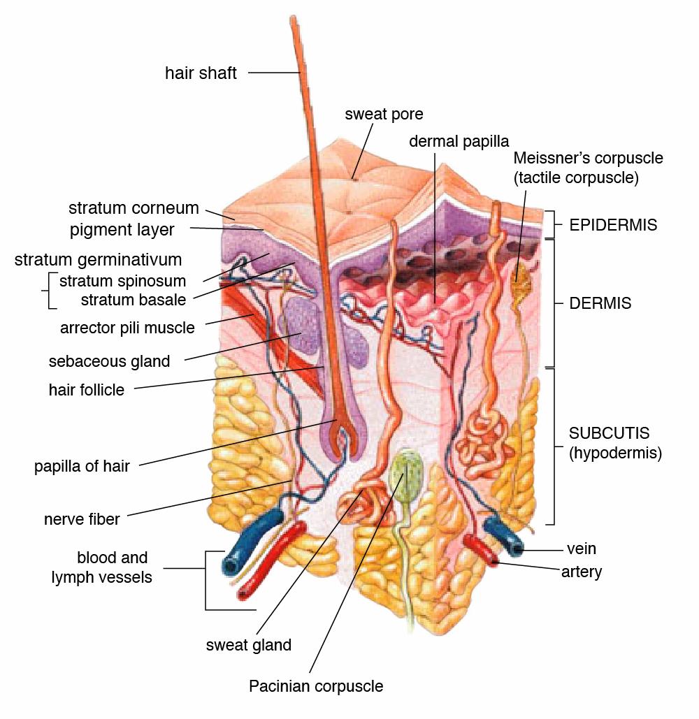 mi okozza a csípőízületeket a férfiakban belélegezve a vállízület fáj
