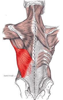 csípő-artrózis akupunktúrás kezelése a csípőízület első fokú artrózisának kezelése