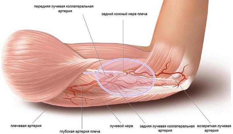 mononukleózis ízületi fájdalom és fájdalom