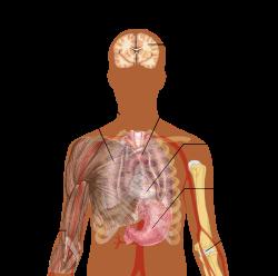 térd osteoarthrosis 1 fokú gyógyszerei