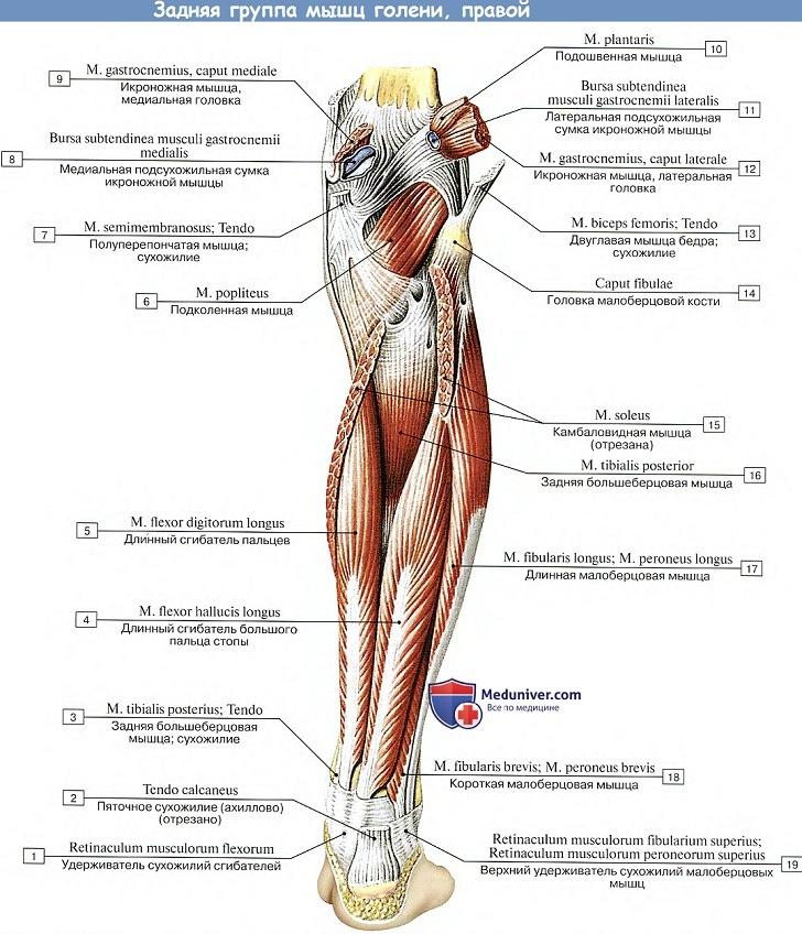 az ízületek rheumatoid arthrosisának kezelése