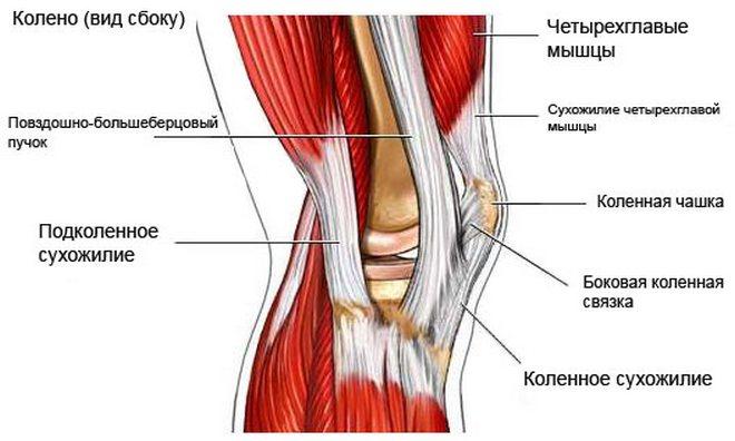 a térdízület belső ligamentumának törése ízületi fájdalom lábujjkezelés