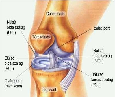 csontok és ízületek fáj, mi ez kenőcsök és gél az oszteokondrozis kezelésére