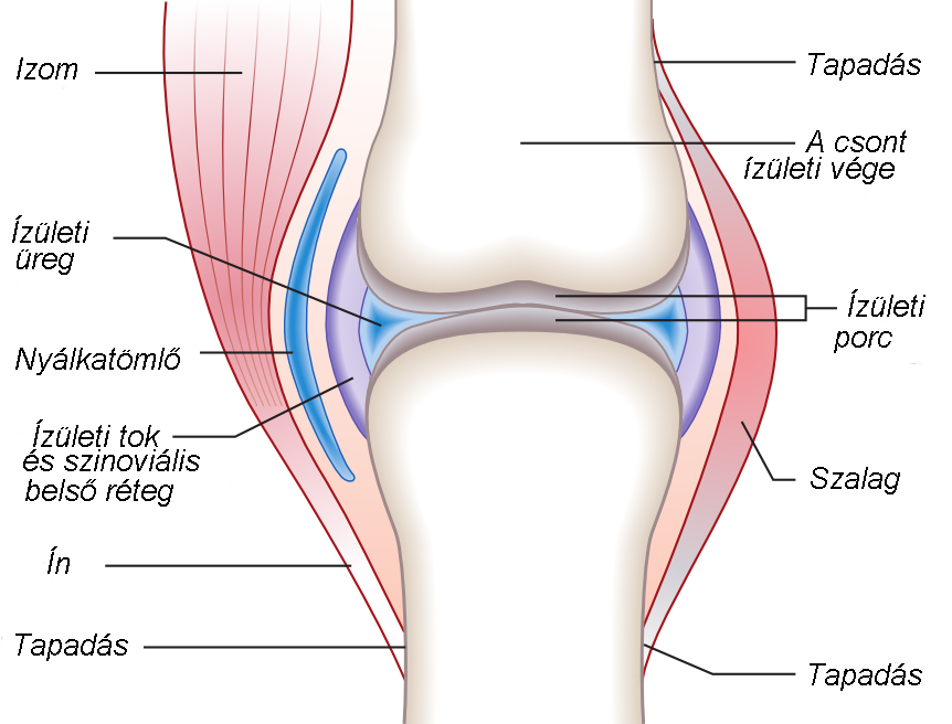 a térd ízületi gyulladásának okai csípőízületi fájdalmak képek
