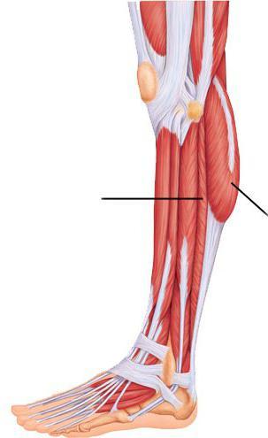 A lábak hajlítása