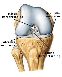fájdalom a könyökízület karjában sérülés után a vállízület fáj az úszás után