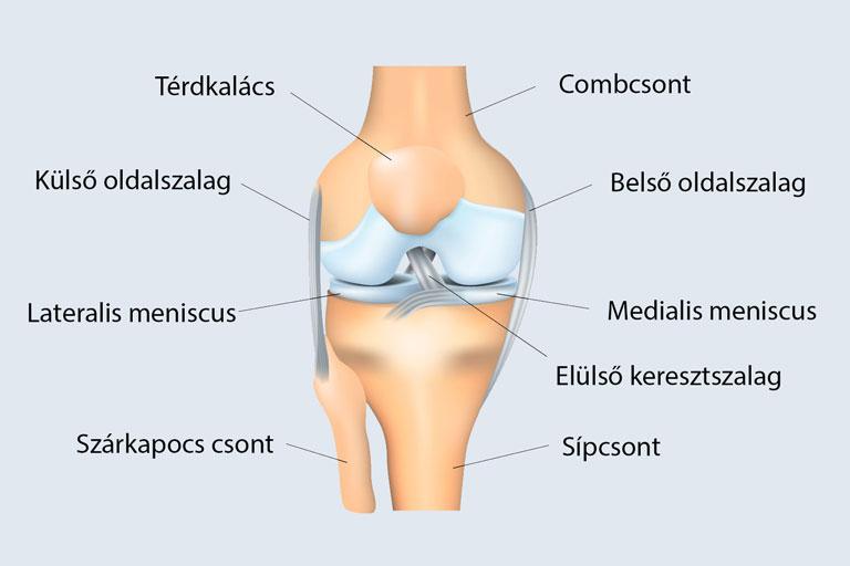 a csípő és a combcsont károsodása