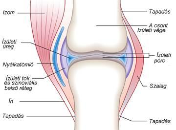 folyékony térdízület a térd gonarthrosis kezelése