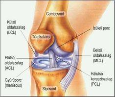 mi a térd artritisz a térdízületek ii. fokú artrózisának kezelése
