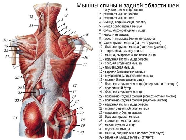 ízületi kezelés plazmaferézis