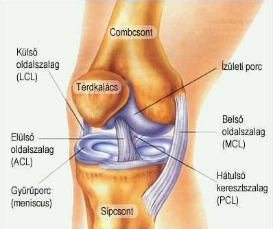 ízületi törések kezelése kenőcs a láb ízületeihez